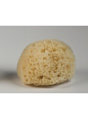 NATURAL HONEYCOMB SPONGE WHITE COLOR