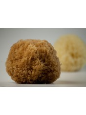NATURAL GRASS SPONGE B CLASS NATURAL COLOR