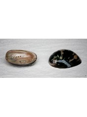 ABALONE BLACK 4.5-5 INCHES
