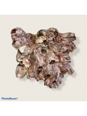 SEA CORAL BARNACLE 5-7 INCHES