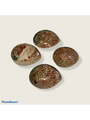 ABALONE MIDAE 5.5-6 INCHES