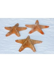 STARFISH MAT 6-8 INCHES