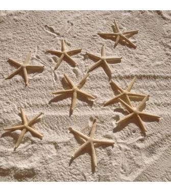 WHITE THIN STARFISH 3-4 INCHES