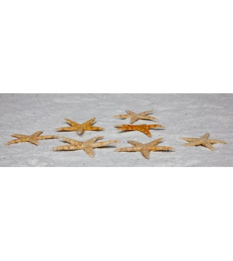 STARFISH FLAT 3-4 INCHES